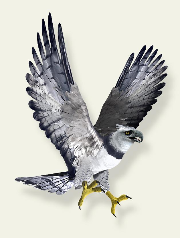 Harpy in flight